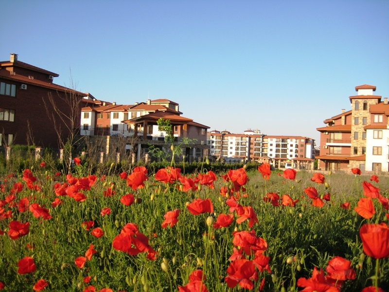 Как купить квартиру с Болгарии на берегу моря недорого