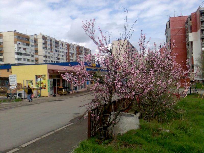 Вторичная недвижимость в Болгарии без таксы содерж